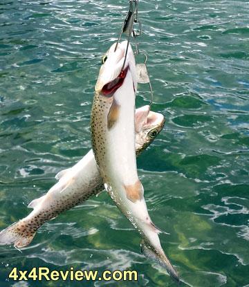 fishing-loon-lake